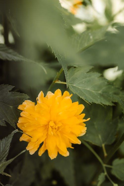 arka fon, arka plan, bitki içeren Ücretsiz stok fotoğraf