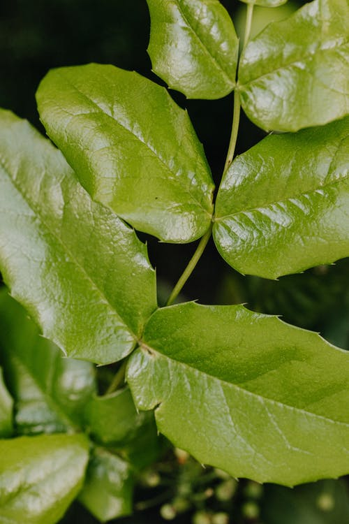 Close-Up Photo Of Leaves