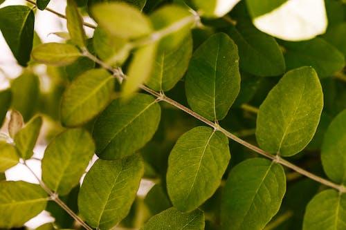 Foto profissional grátis de aumento, borrão, botânico