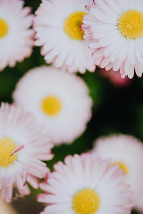 alan derinliği, Beyaz çiçekler, bitki örtüsü içeren Ücretsiz stok fotoğraf