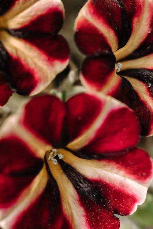 bitki örtüsü, bulanıklık, büyüme içeren Ücretsiz stok fotoğraf