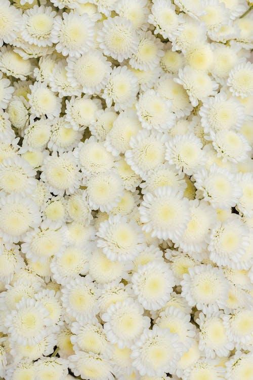 Ingyenes stockfotó fehér virágok, finom, háttér, háttérkép témában