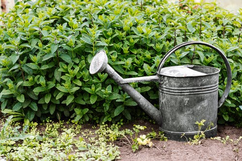 Gray Watering Can Beside Green Plant