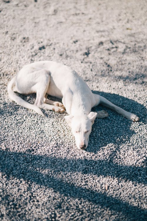 Photo Of White Dog Laying On Ground