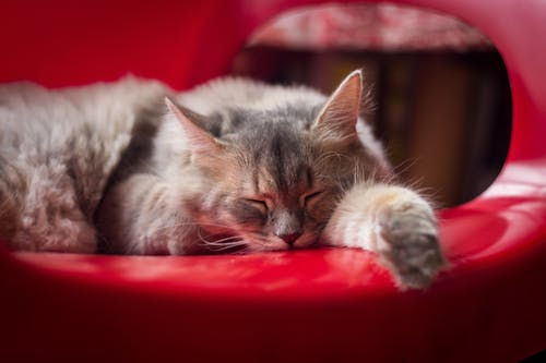 Close-Up Photo Of Sleeping Cat