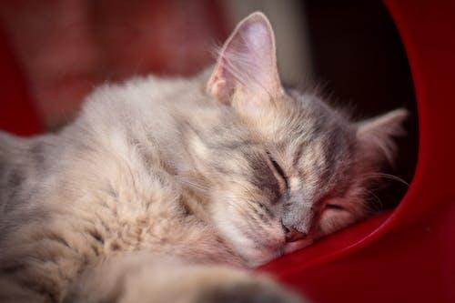 Close-Up Photo Of Sleeping Cat