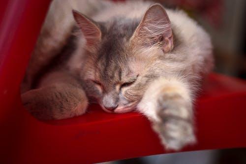 Free stock photo of cat, cat face, cute, love