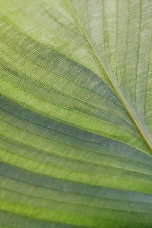 Foto profissional grátis de botânico, close, conhecimento