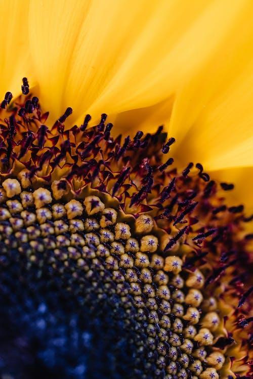 Ảnh lưu trữ miễn phí về hệ thực vật, hình nền, hình nền câu chuyện instagram, hoa đẹp