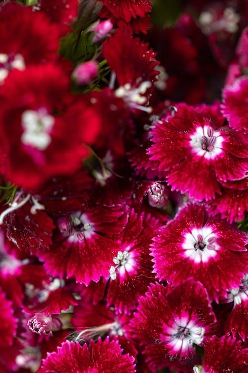 Foto stok gratis bagus, benang sari, berbunga, bersemangat