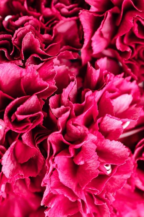 instagram故事背景, 壁紙, 特寫, 粉紅色的花 的 免费素材图片