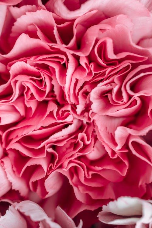 arka fon, arka plan, çiçek içeren Ücretsiz stok fotoğraf