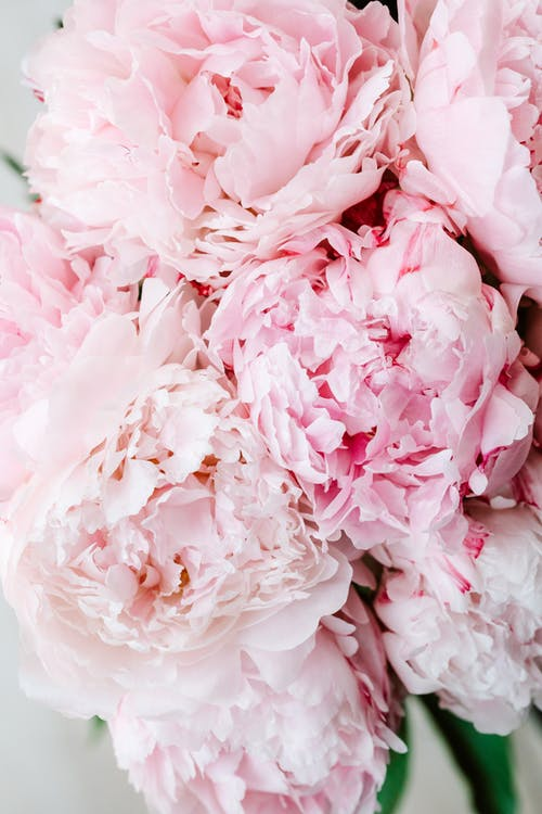 Fotobanka sbezplatnými fotkami na tému detailný záber, instagram príbeh pozadia, krásny, kvetinové pozadie