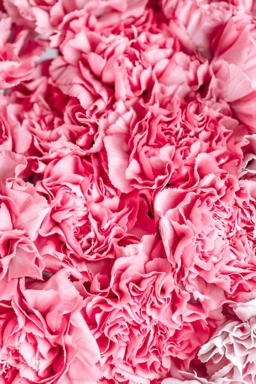 Immagine gratuita di bouquet, carta da parati floreale, carta da parati rosa