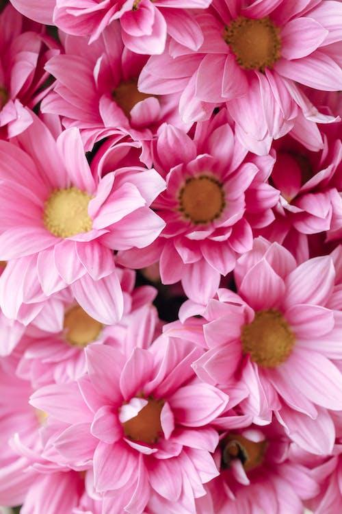 Gratis stockfoto met achtergrond, behang, bloeiend, bloemen