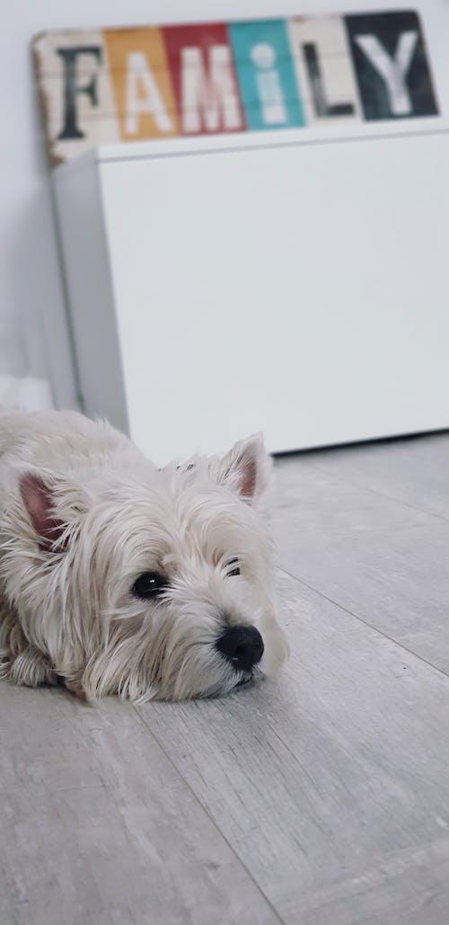 가족, 개, 하얀색의 무료 스톡 사진