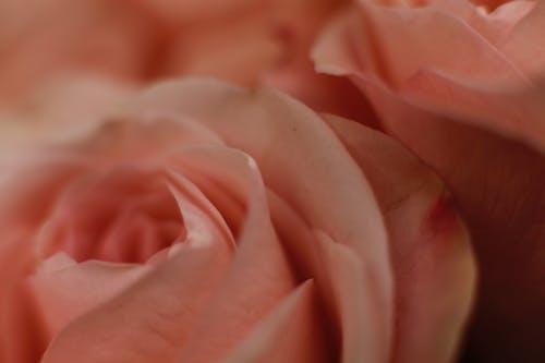 Fotos de stock gratuitas de flor, macro