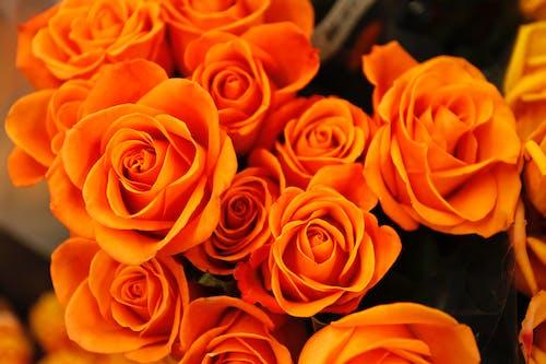 Bed of Orange Petaled Flower