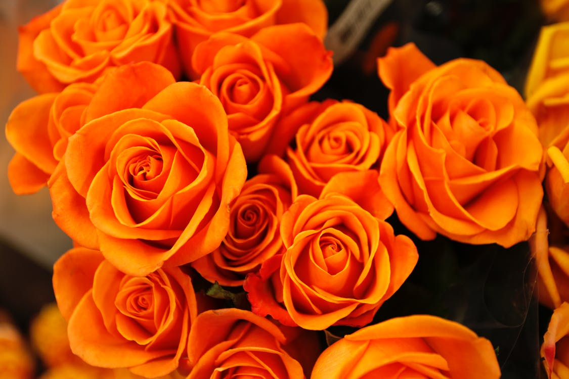Bed of Orange Petaled Flower