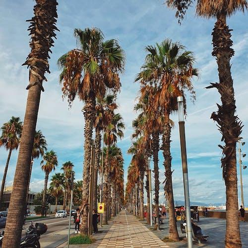 바르셀로나, 스페인, 야자나무의 무료 스톡 사진