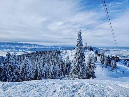 가루, 감기, 겨울의 무료 스톡 사진
