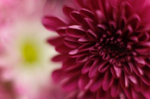 Fotos de stock gratuitas de flores, macro