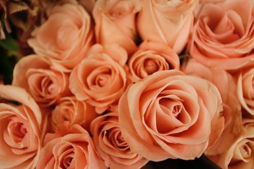 Fotos de stock gratuitas de flores, macro, rosas