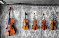 music, musician, sound