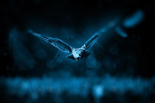 Bird Flying Blue Light Photo