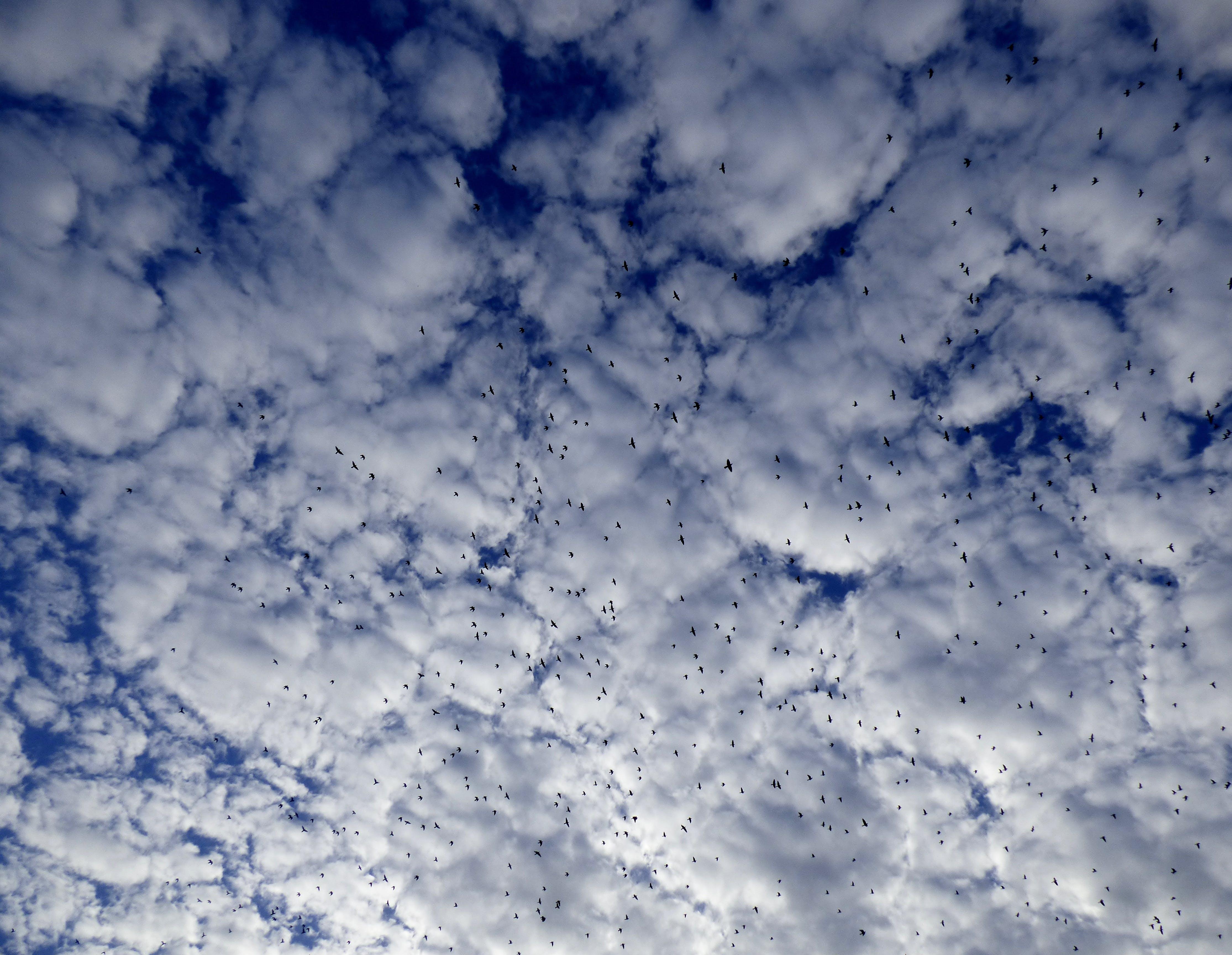 Безкоштовне стокове фото на тему «білий, голуб, Голуби, небо»