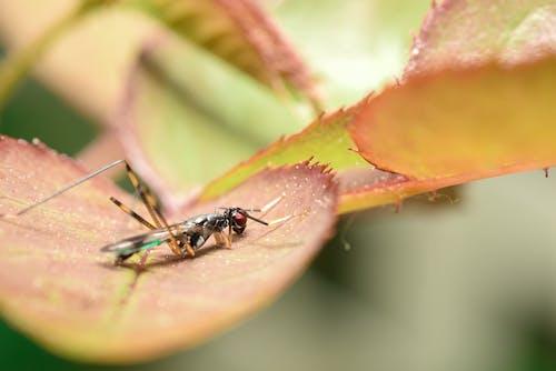 Free stock photo of buglife, bugs, macro
