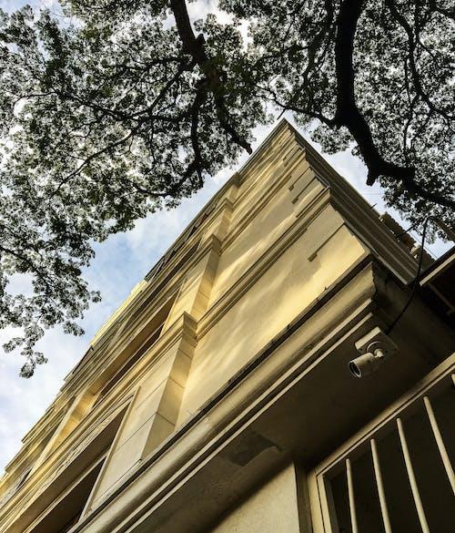 ağaç, apartman binası, bakış açısı, doğa içeren Ücretsiz stok fotoğraf