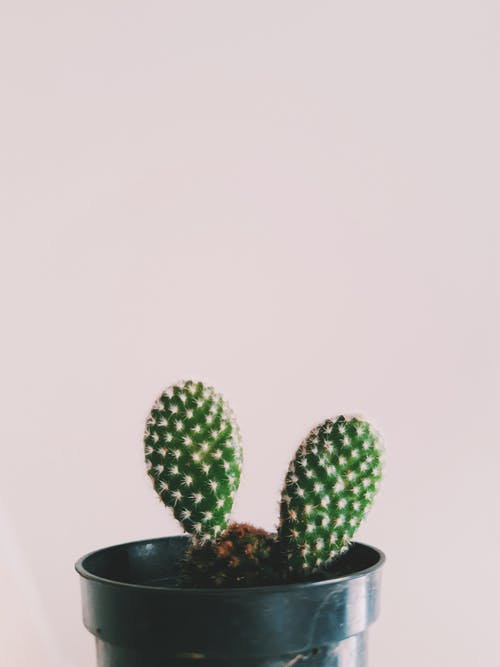 Black plastic pot with green thorny cactus growing near white wall in daylight