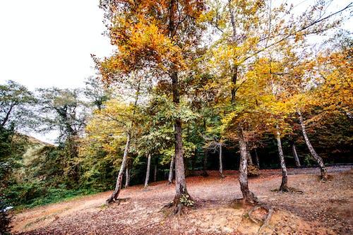 Free stock photo of belgrat jungle, colors, istanbul