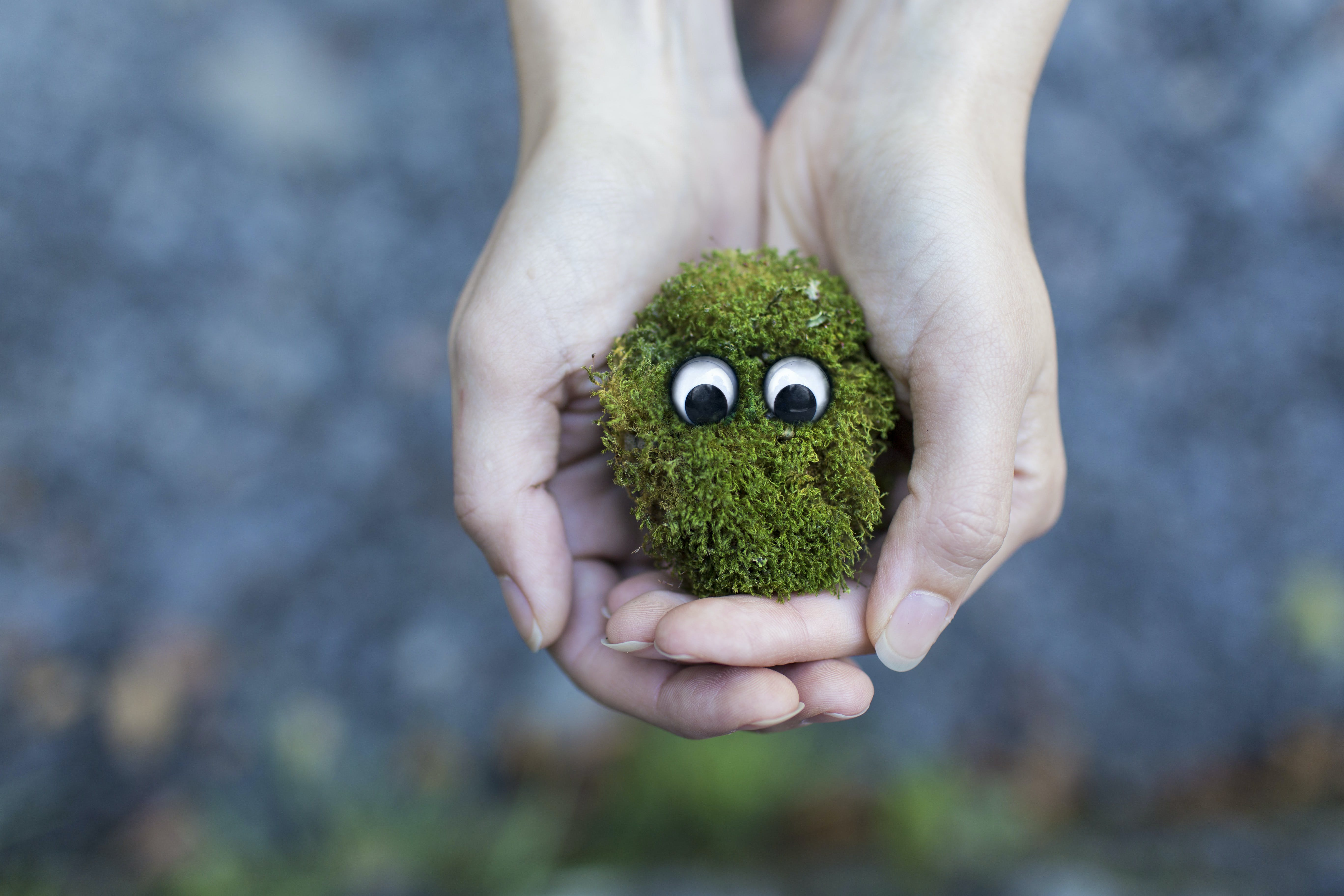 Person Showing Green Plant With Eyes
