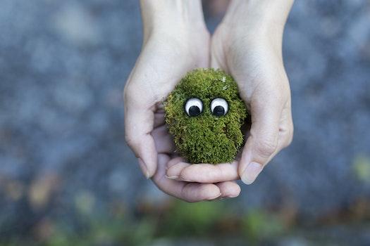Free stock photo of hands, creative, grass, moss