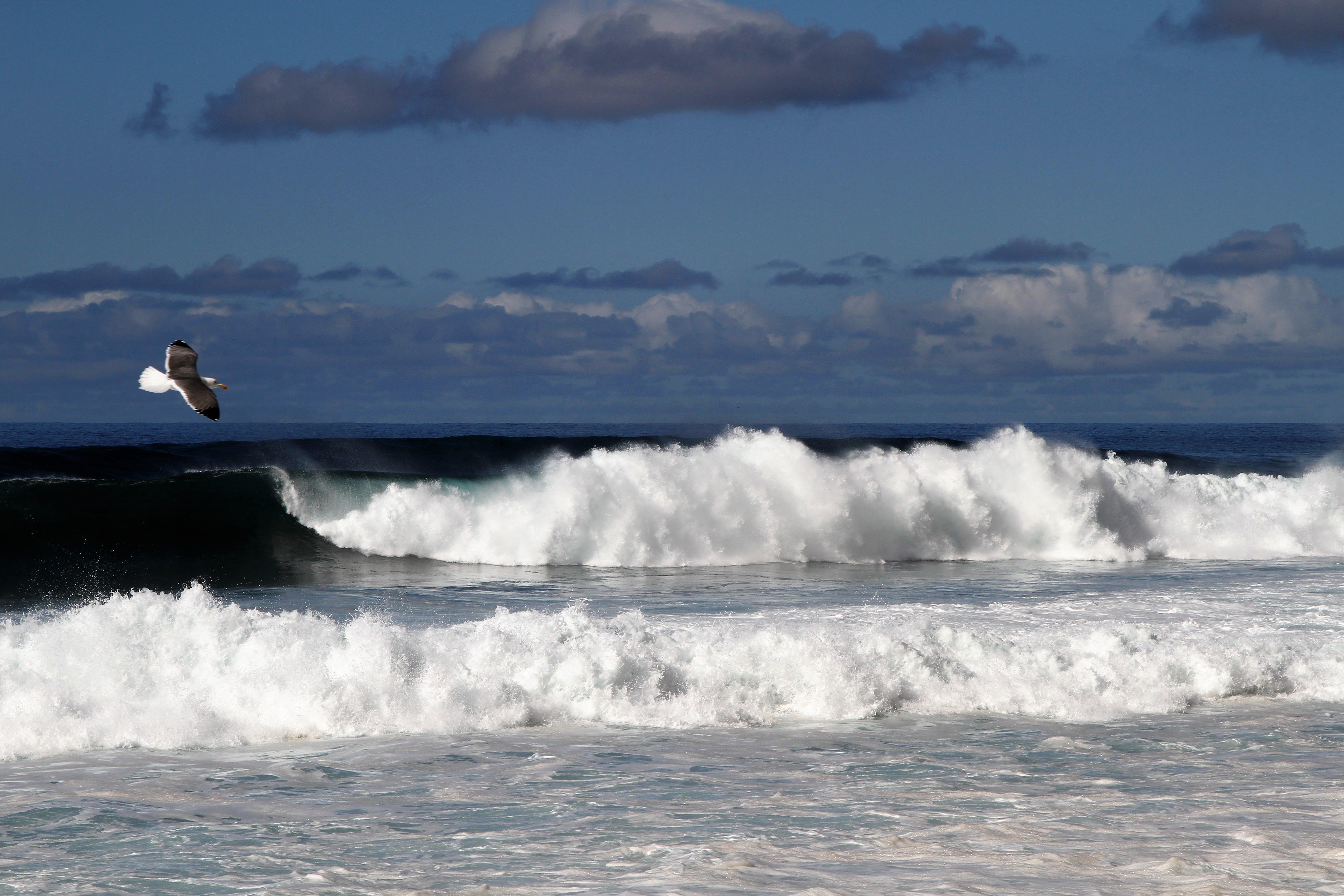 Free stock photo of sea bird, waves