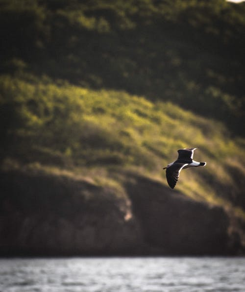 Black and White Bird Flying over the Lake