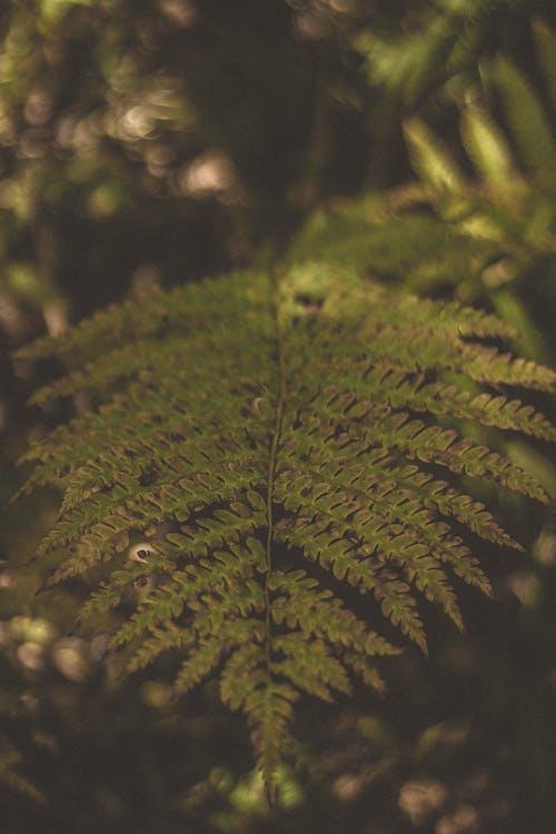 Green Fern Leaves on Stem