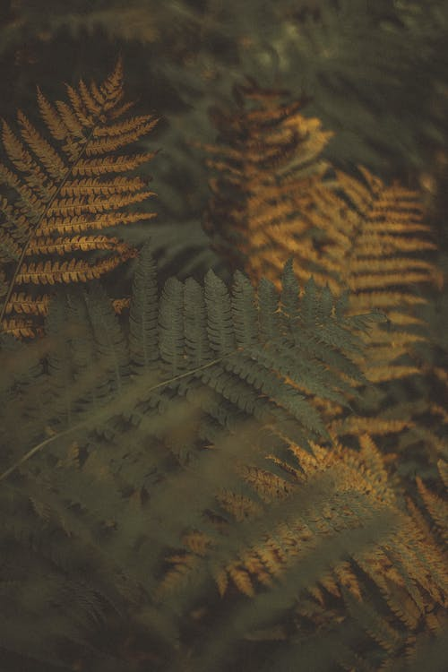 Green and Yellow Fern Leaves