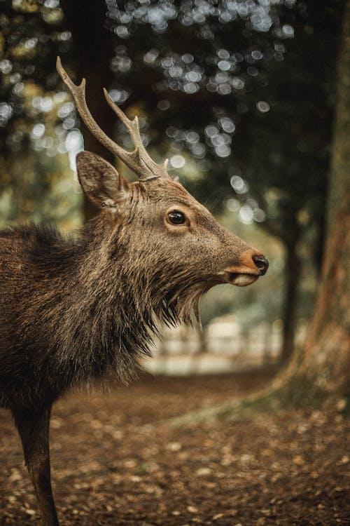 Brown Deer Standing on Brown Field