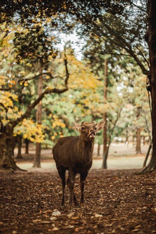 Brown Deer Standing on Brown Dirt Road