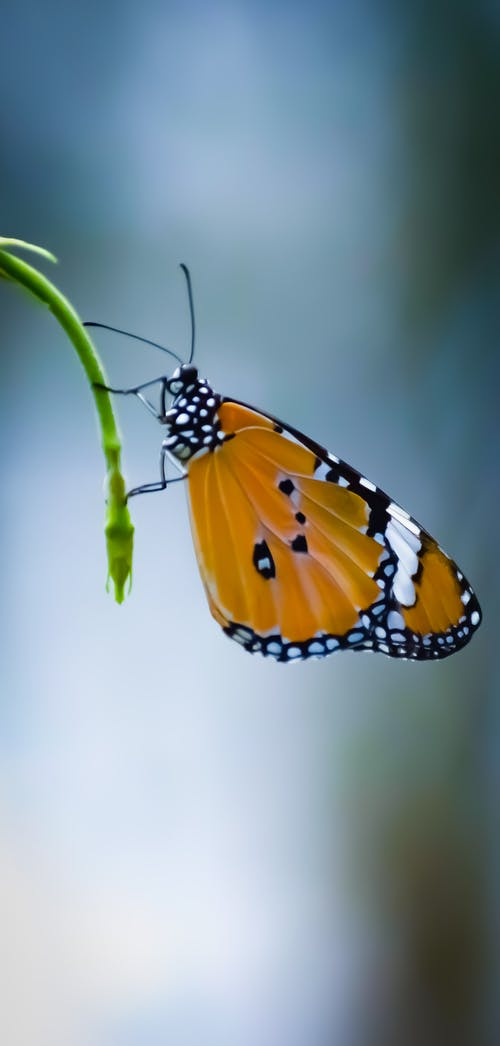 Colorful butterfly resting on thin plant stem