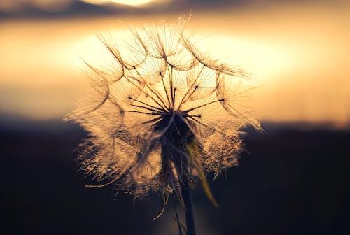 Ilmainen kuvapankkikuva tunnisteilla auringonlasku, aurinko, hauras, hieno
