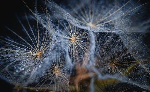 Ilmainen kuvapankkikuva tunnisteilla festivaali, hämähäkinverkko, hämähäkki, hauras