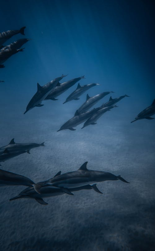 Amazing view of pod of cute wild dolphins swimming in blue ocean waters