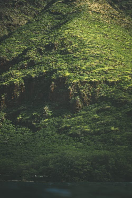 Picturesque scenery of rocky mountain ridge covered with green plants in wild valley in sunlight