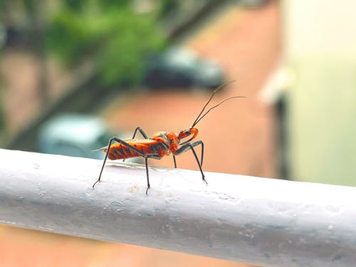Free stock photo of ants, bugs, close-up, macro photo