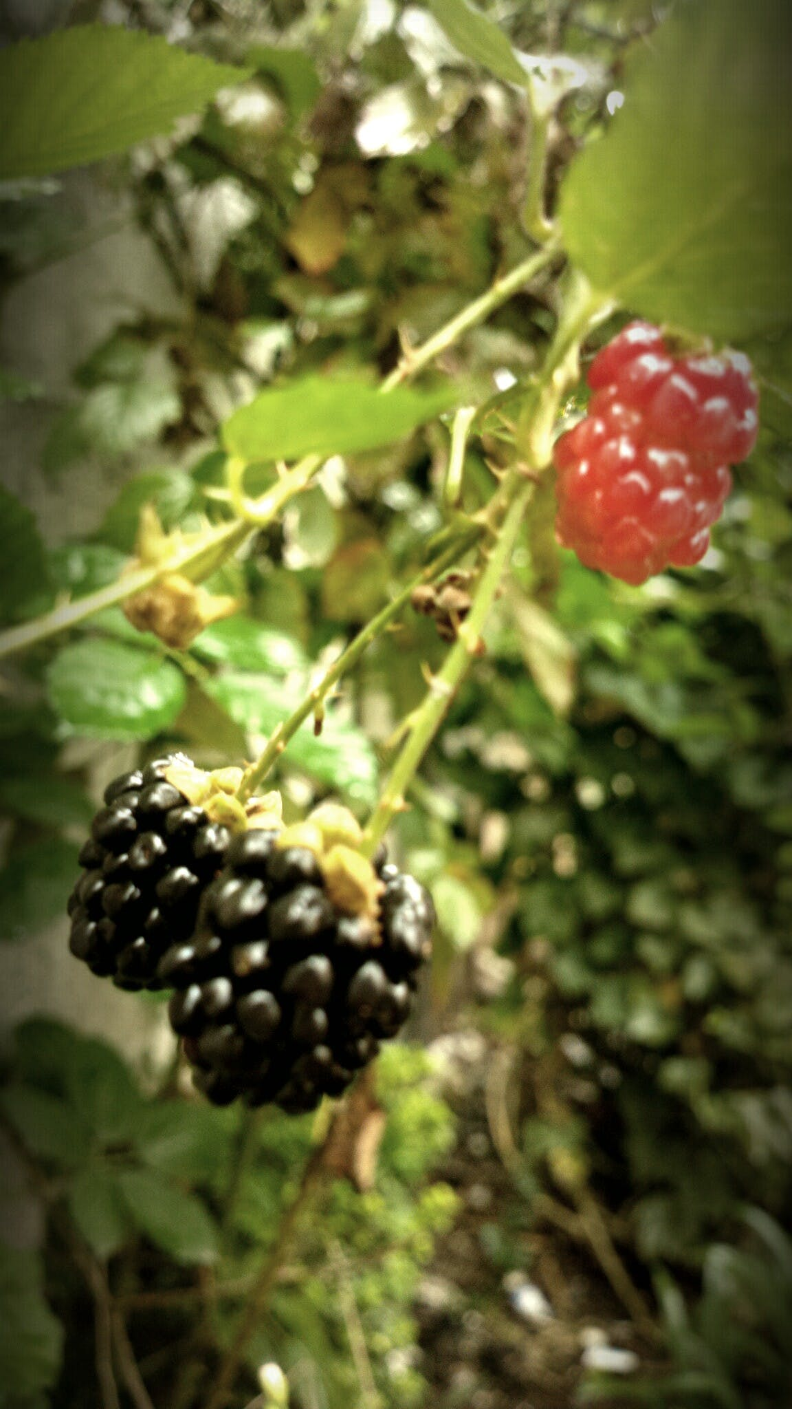 Free stock photo of citrus fruit, contrast, garden, green