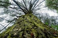 natur, wald, bäume